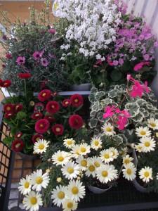 花画像 (2)